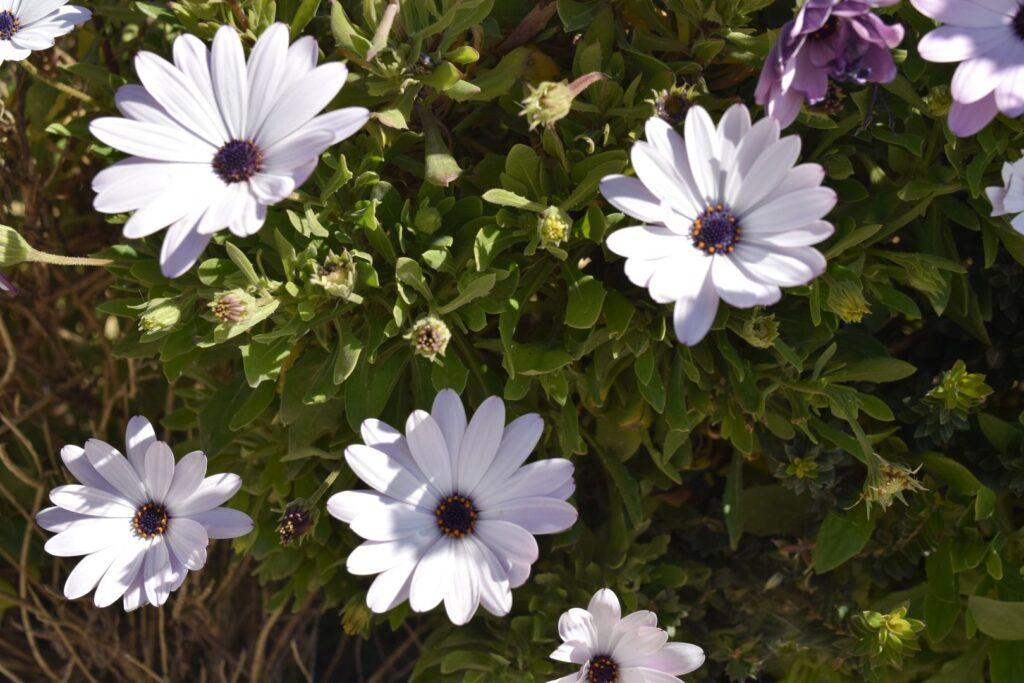 kwiaty na Malcie