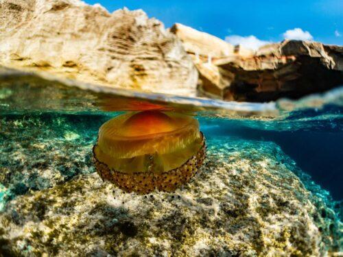 meduzy na Malcie